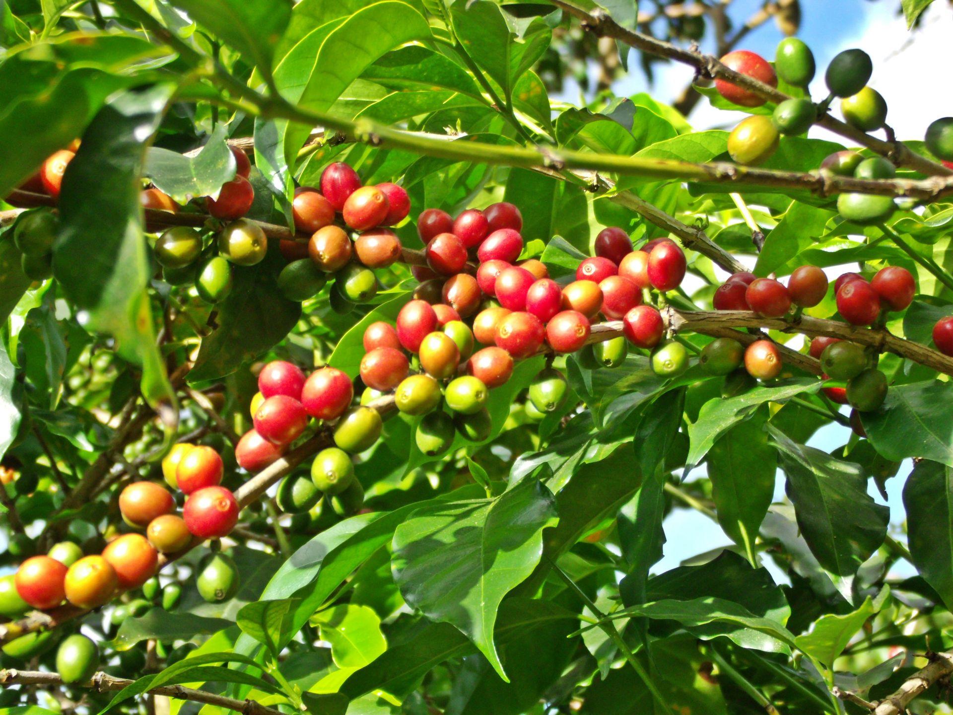 Sortimentswechel bei Kaffee